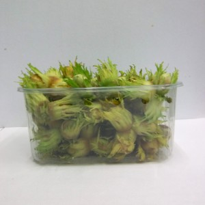 500g – 3Kg: Green/Golden Gunslebert Cobnuts
