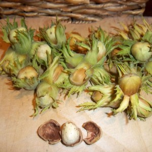 20Kg:  Green/Golden Gunslebert Cobnuts
