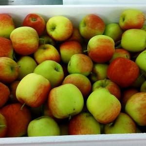 Fresh British Apples 7Kg – 9Kg