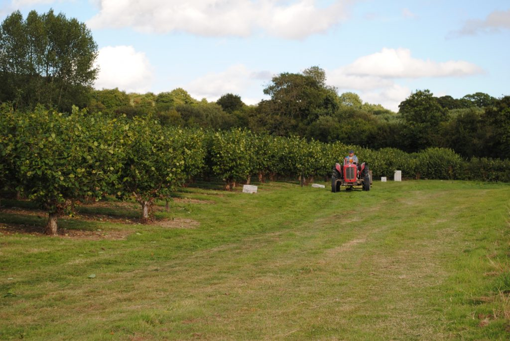 Landscape Roughway Farm cobnut plat and tractor