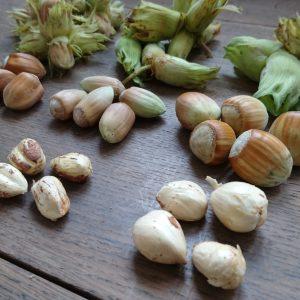 Scrumptious cobnut varieties