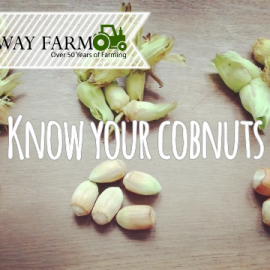 Know your cobnuts
