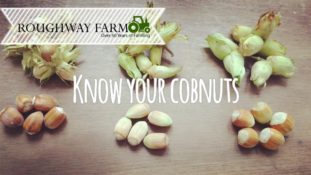 Know your cobnuts still of the varieties and Roughway Farm brand
