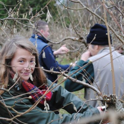 Young lady pruning cobnuts