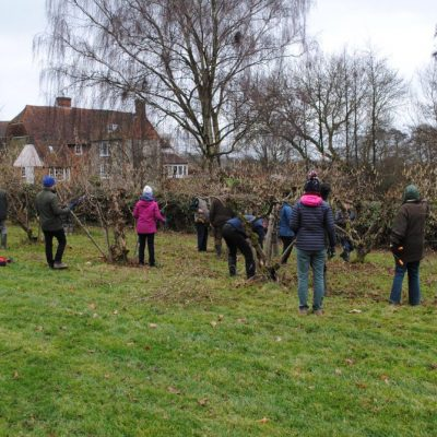 Learning how to prune kentish cobnuts