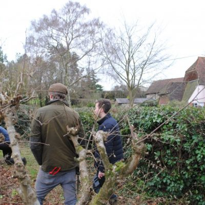 Learning how to prune cobnuts