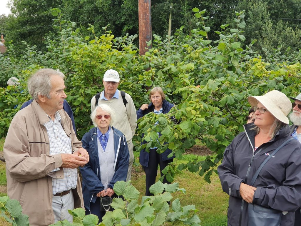 cobnut field walk at roughway farm