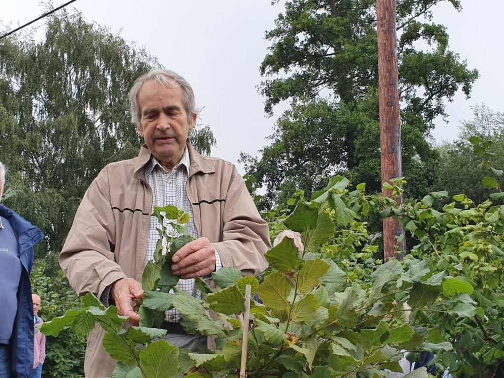 let part of the cobnut tree to develop