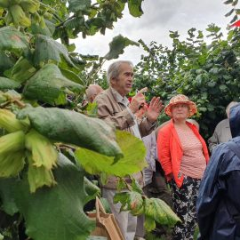 John Cannon showing cobnuts to RHS members
