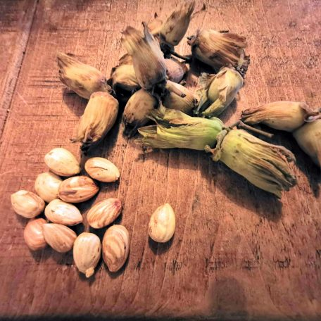 Husked cobnuts cracked