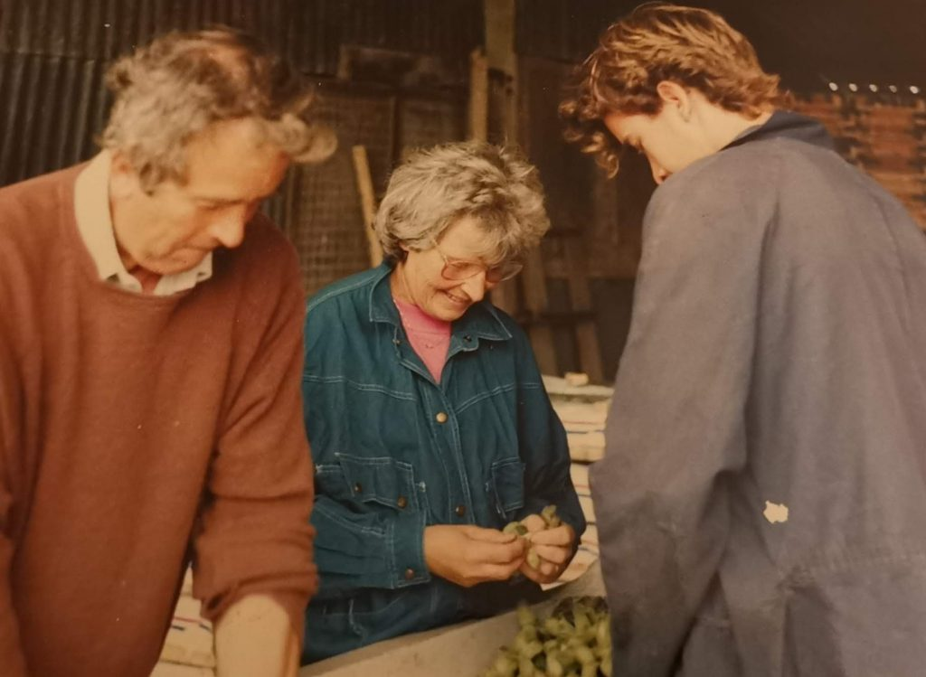 Family pack cobnuts for market (Circa 1985)