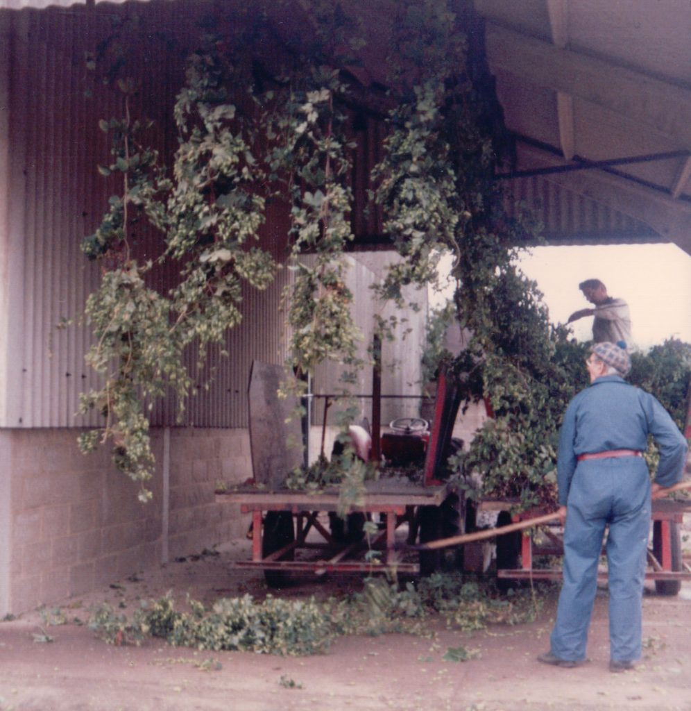 Hop Production (Circa 1987)