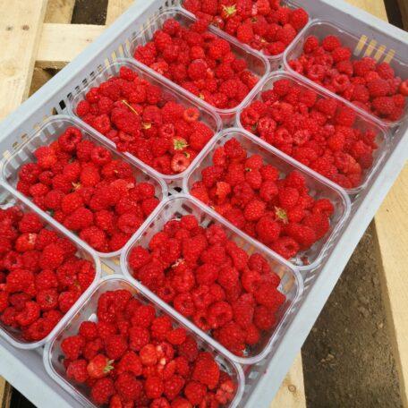 Tray of 2nd class raspberries