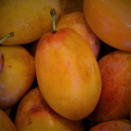 A ripe Aprimira close up